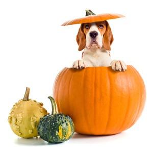 groente soep voor de hond