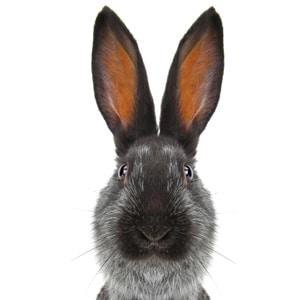 natuurlijke konijnensnacks